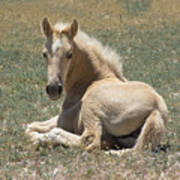 Resting Filly Poster by Nicole Markmann Nelson