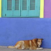 Resting In Boca Poster