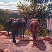 Resting On The Kaibab Trail Poster