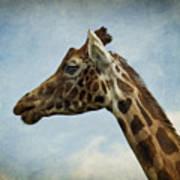 Reticulated Giraffe Head Poster