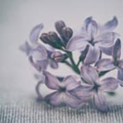 Retro Lilac Flower Poster