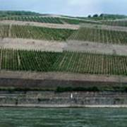 Rhine Valley Vineyards Panorama Poster