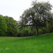 Rhineland-palatinate Summer Meadow Poster