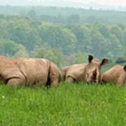 Rhino Heard Panarama Poster