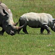 Rhino Mother And Calf - Kenya Poster