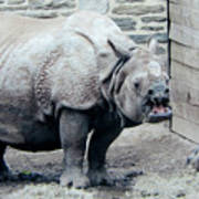 Rhinoceros And Baby Poster
