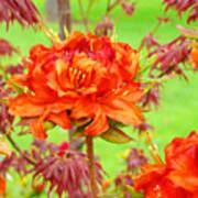 Rhododendron Flower Landscape Art Prints Floral Baslee Troutman Poster