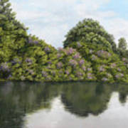 Rhododendrons By The River Poster