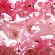 Rhododendrons Flowers Art Print Pink Rhodies Baslee Troutman Poster