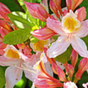 Rhododendrons Garden Floral Art Print Pink Rhodies Poster