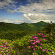 Rhododendrons On The Blue Ridge Parkway Poster