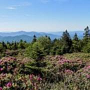 Rhododendron On Roan Mountain Poster