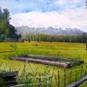 Rice Fields At Laaiy Krui Lampung Sumatra Indonesia 2008  Poster