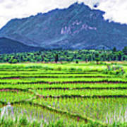 Rice Paddies And Mountains Poster