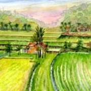 Ricefield Panorama Poster