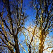 Ripple Tree Poster