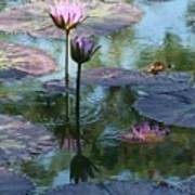 Ripples and Pink Lilies Poster