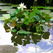 Ripples On The Lotus Pond Poster