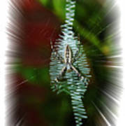 'ritin' Spider Poster