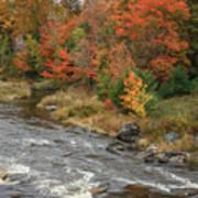 River Foliage Poster