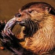 River Otter With His Catch Of The Day Poster