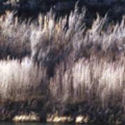 River Sage Poster