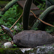 River Turtle 1 Poster