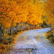 Road Between Trees Poster