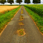 Road In Rural France Poster