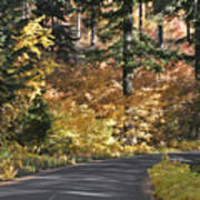 Road To Autumn Poster
