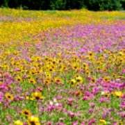 Roadside Flower Garden Poster