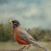 Robin Abstract Background Poster