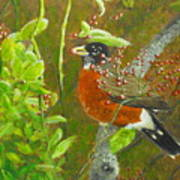 Robin In The Serviceberry Bush Poster