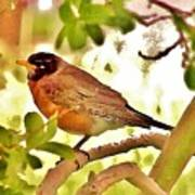 Robin In Tree Poster