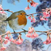 Robin On Winter Flowering Plum Poster