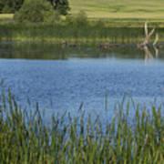 Rochester Wildlife Pond 1 Poster
