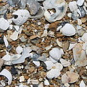 Rock N Shells Poster