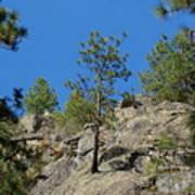 Rockin' Tree Poster