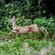 Rocking Deer Poster