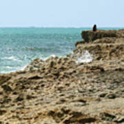 Rocky Limestone Cliff Blowing Rocks Preserve Jupiter Island Florida Poster