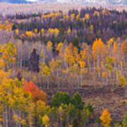 Rocky Mountain Autumn View Poster