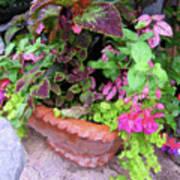 Roger's Gardens Begonia Poster