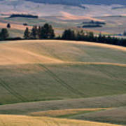 Rolling Hills Of The Palouse Poster