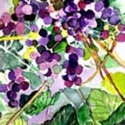 Roman Grapes Poster