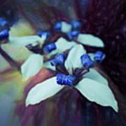 Romantic Island Lilies In Blues Poster
