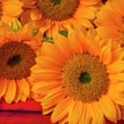 Romantic Sunflowers Poster