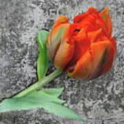 Romantic Tulip Poster