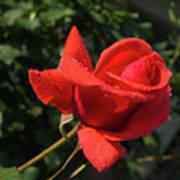 Rose 03 Poster