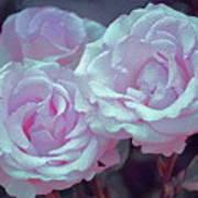 Rose 118 Poster by Pamela Cooper