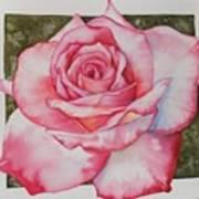 Rose 3 Poster